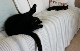 whydocatshavetails