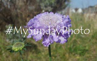 #MySundayPhoto31 featured