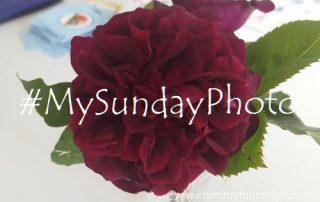 #MySundayPhoto41 featured