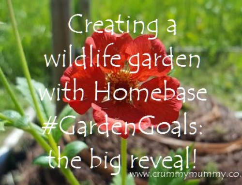 Creating a wildlife garden with Homebase #GardenGoals: the big reveal!