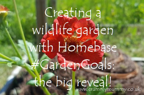 Creating a wildlife garden with Homebase #GardenGoals