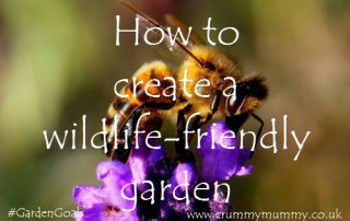 How to create a wildlife-friendly garden