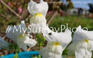 #MySundayPhoto104