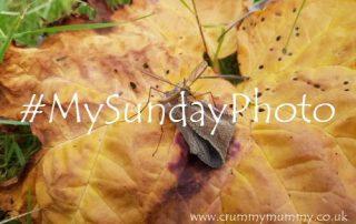 #MySundayPhoto108 main