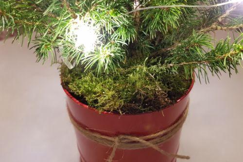 Tree2mydoor review 4