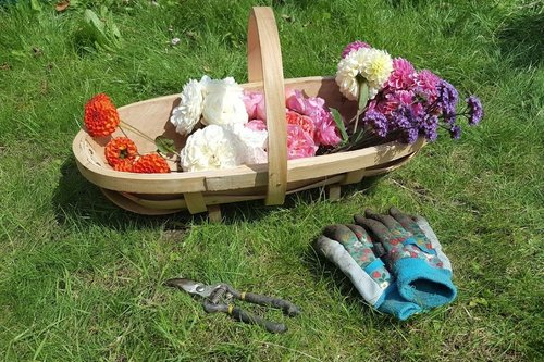 ways gardening helps me stay sane