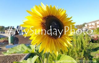 #MySundayPhoto160 main