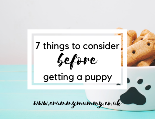 7 things to consider before getting a puppy